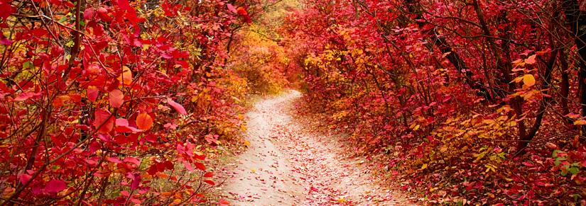 - Les couleurs de l'automne