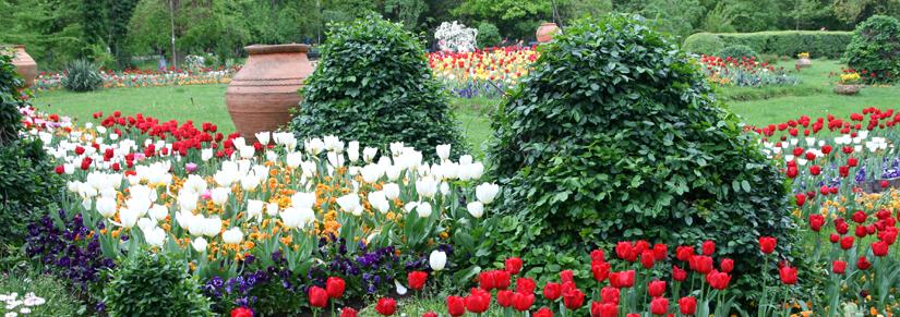- Que faire au mois de Mai au jardin ?