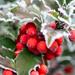 - Noël le mois des traditions